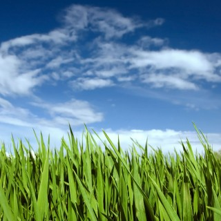 ben fredericson - blue sky and grass ipad wallpaper