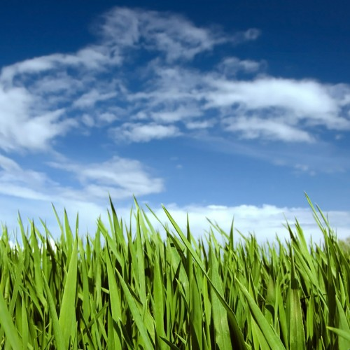 Green grass landscape iPad Wallpaper