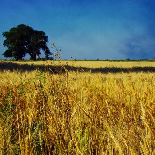 claudio ar - skies and fields from argentinas pampa ipad wallpaper