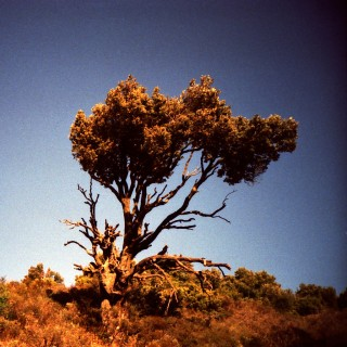 almogaver - desert tree ipad wallpaper