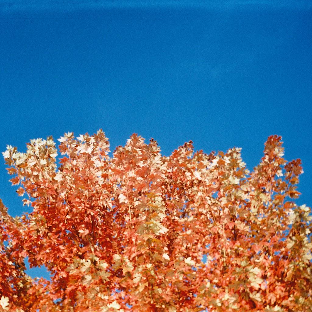 auggie tolosa - brown leaves ipad wallpaper