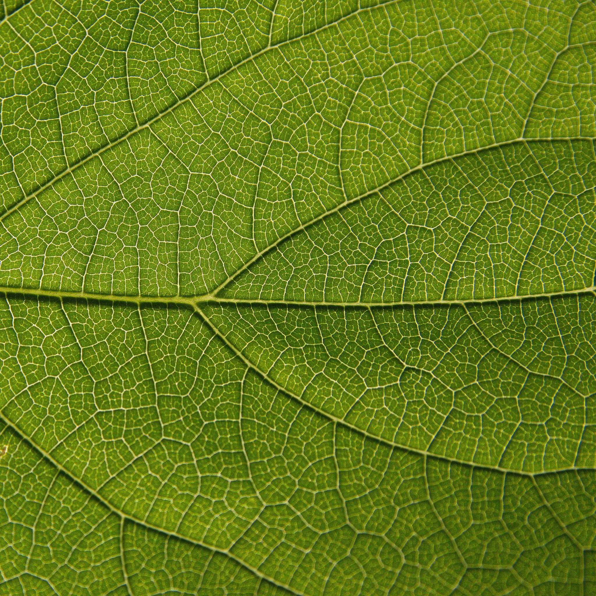brent leimenstoll - macro leaf texutre ipad wallpaper