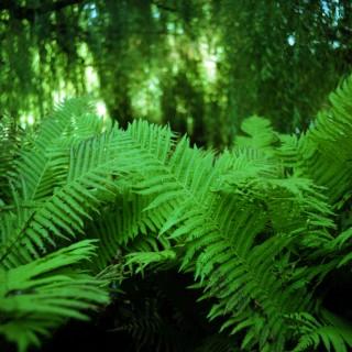 danny - green fern ipad wallpaper
