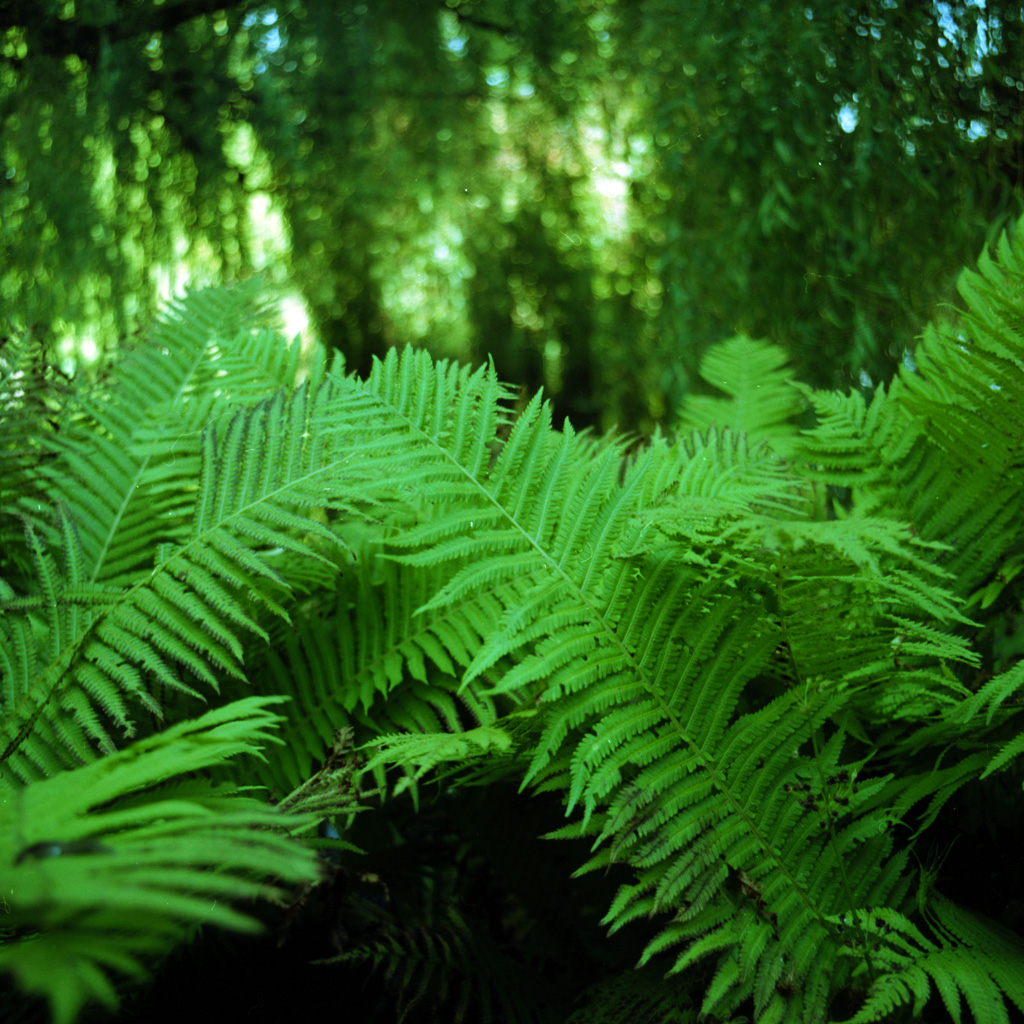 danny - green fern ipad wallpaper