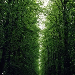 danny - trinity college trees ipad wallpaper