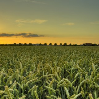 doblonaut - hdr wheat field at sunset ipad wallpaper