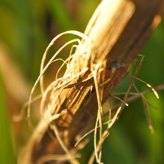 duckfarm - stringy plant ipad wallpaper