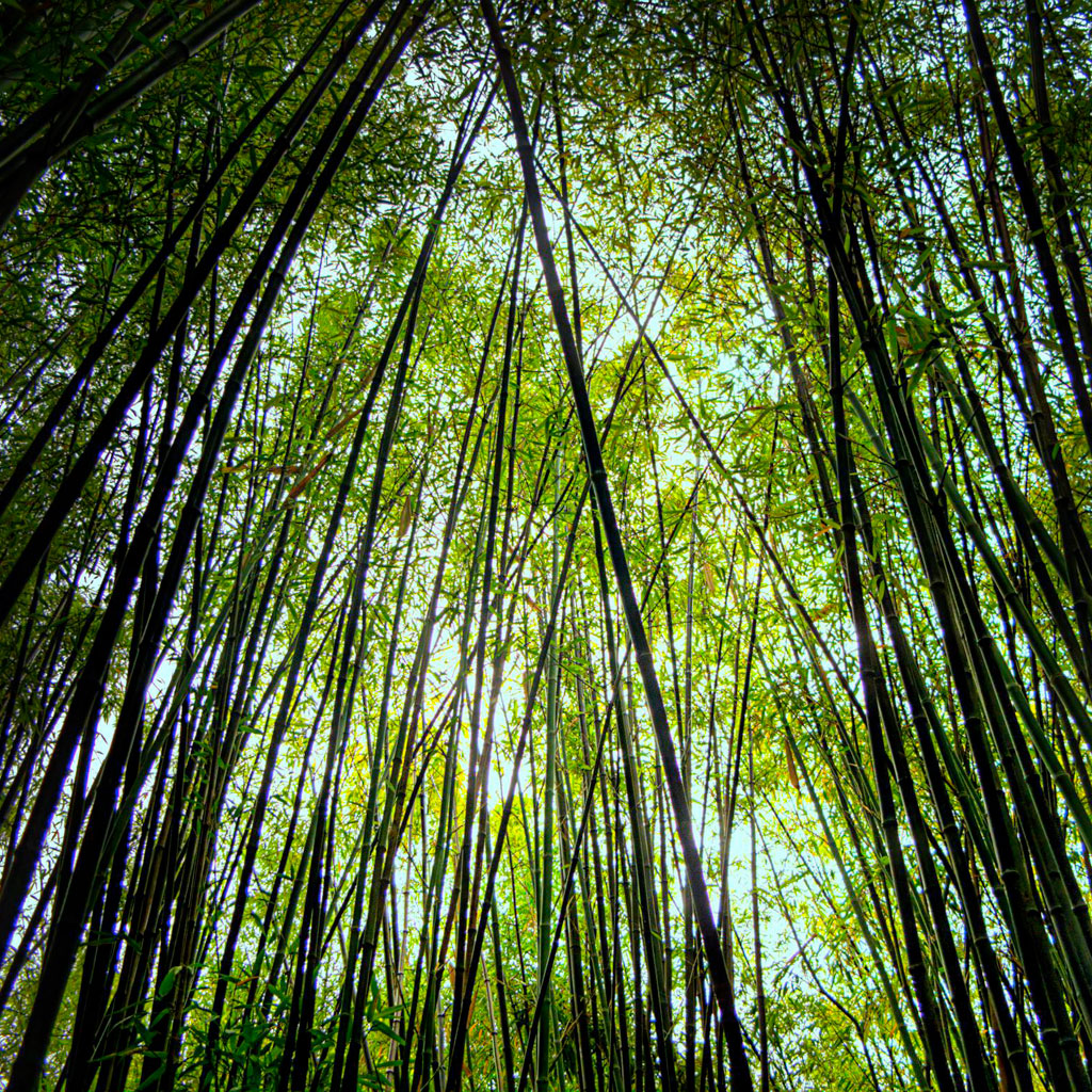 ecstaticist - bamboo forest ipad wallpaper