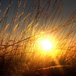 ecstaticist - sunkissed grass ipad wallpaper