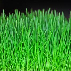ian sane - green grass closeup ipad wallpaper