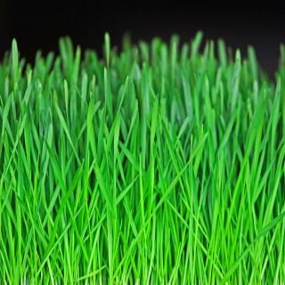 ian sane - green grass closeup ipad wallpaper