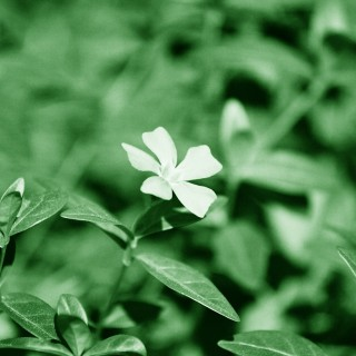 jacobh95 - white flower ipad wallpaper