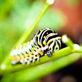 jorge quinteros - caterpillar ipad wallpaper