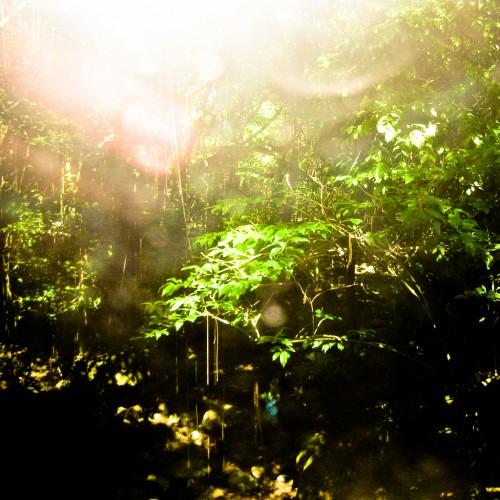 Walking the humid rainforest of St.Lucia by Jorge Quinteros Ipad wallpaper