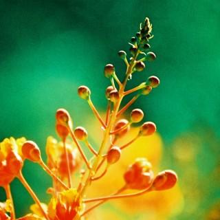 kevin dooley - macro flower ipad wallpaper