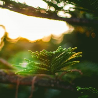 laura flores - green branch bokeh ipad wallpaper
