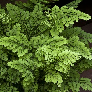 liz west - green fern leaves ipad wallpaper