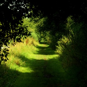 lovestruck. - towpath green tree tunnel ipad wallpaper