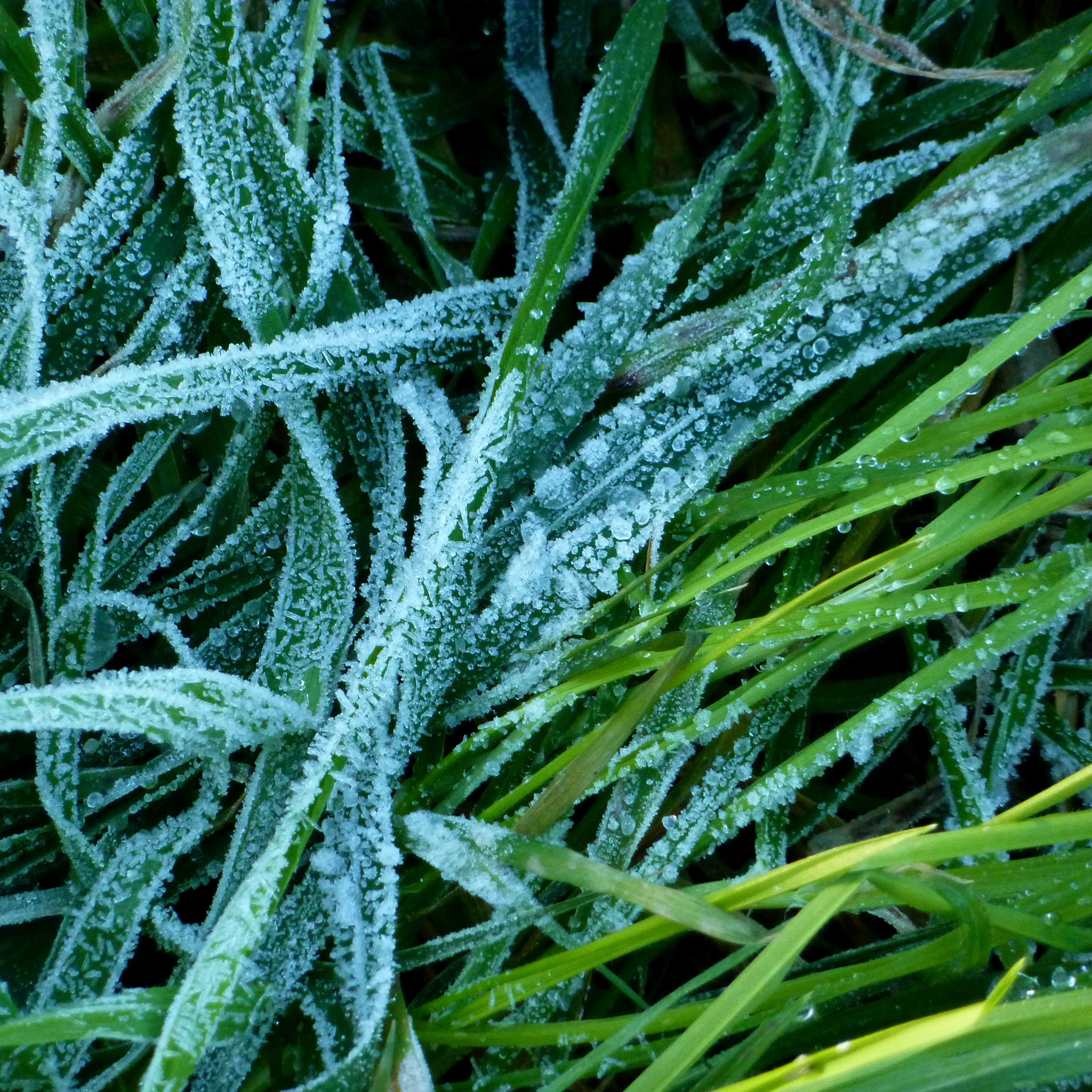 manel - frost on a grass ipad wallpaper