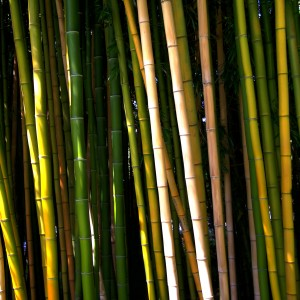 mark sebastian - bamboo ipad wallpaper