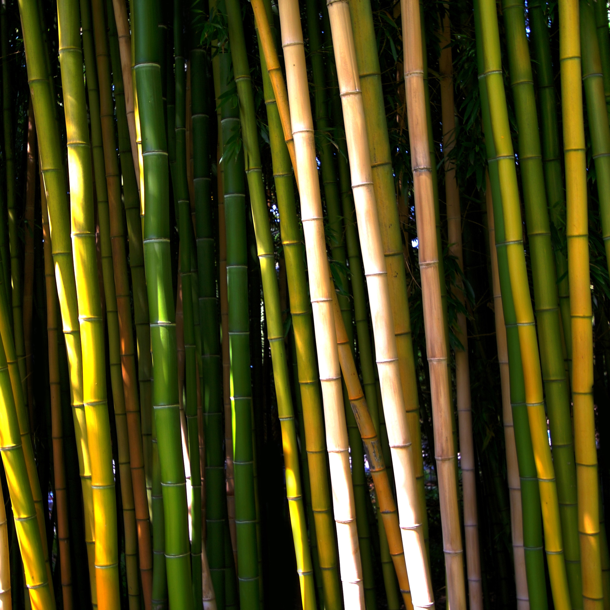 mark sebastian - bamboo ipad wallpaper