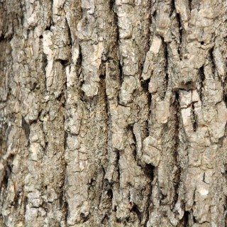 mitch - tree bark texture ipad wallpaper
