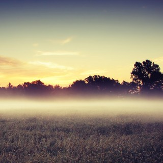 notmiown - morning mist ipad wallpaper