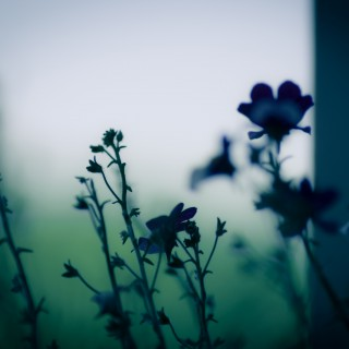 paul longinidis - dark flowers ipad wallpaper