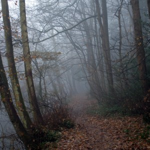 rik o hare - foggy forest path ipad wallpaper