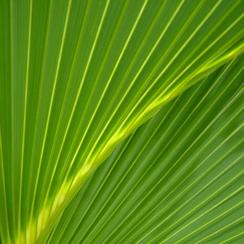 Palm leaf iPad Wallpaper