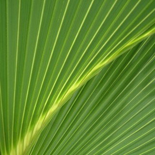 riv - palm leaf texture ipad wallpaper