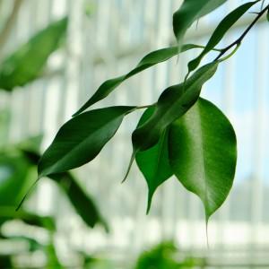 scott wylie - green leaves ipad wallpaper