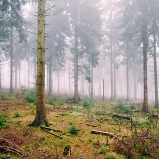 scott wylie - misty winter forest ipad wallpaper