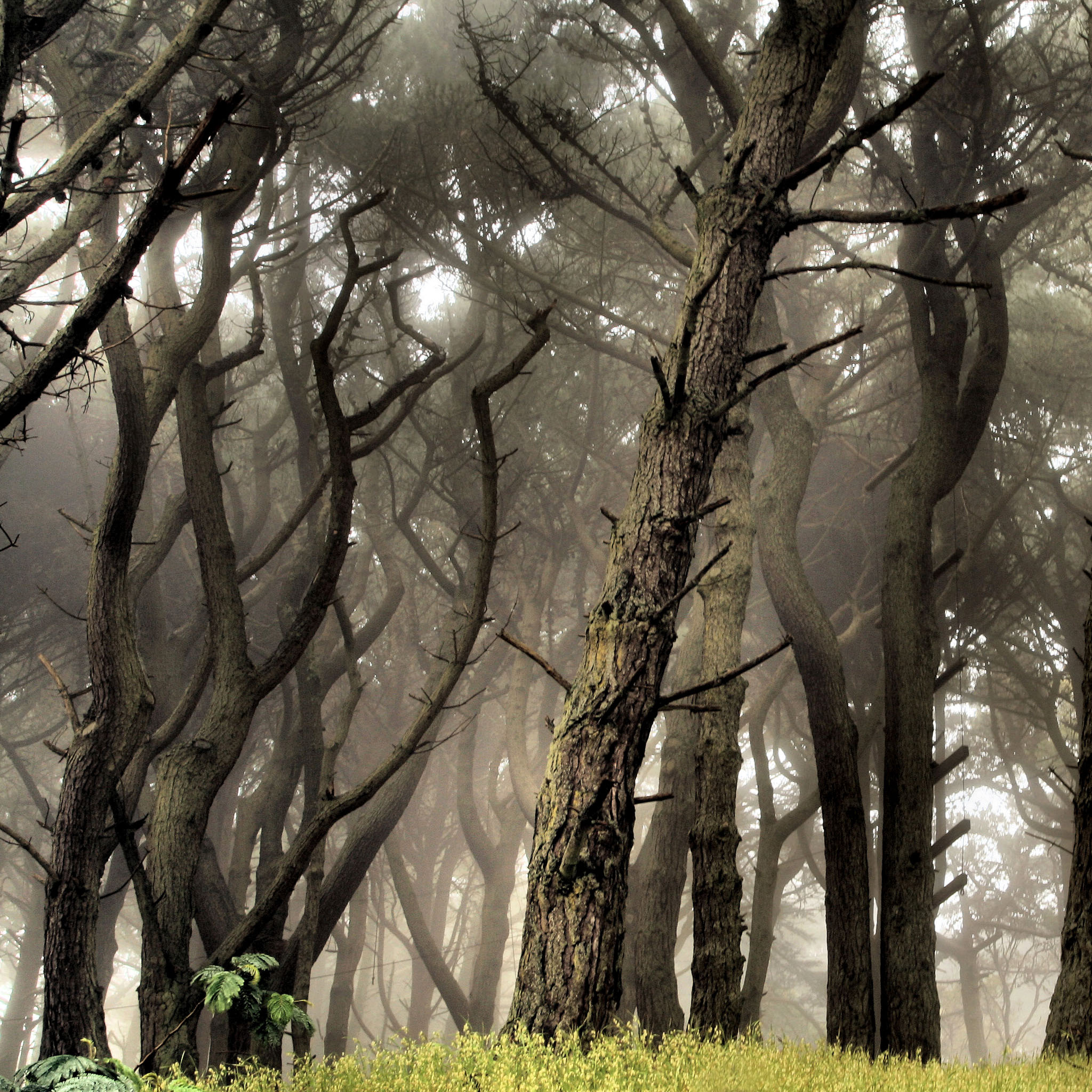 sharon mollerus - fog grey forest ipad wallpaper