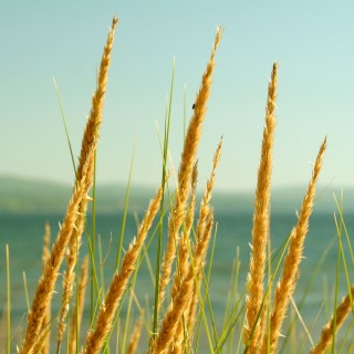 sharon mollerus - lake grass ipad wallpaper