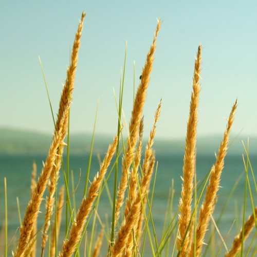 Lake Grass by Sharon Mollerus Ipad wallpaper