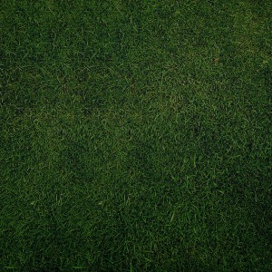 sniperyu - plain green grass texture ipad wallpaper