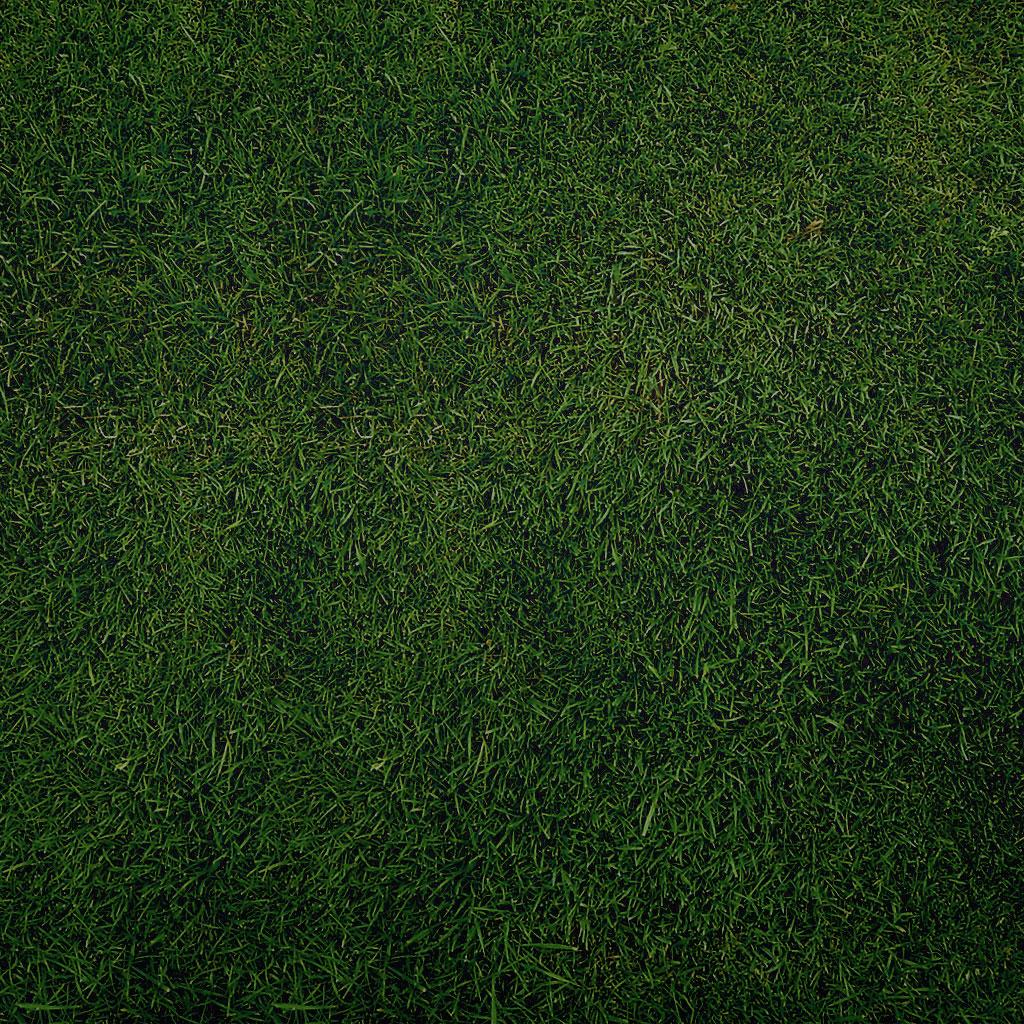 Great Wallpaper Night Grass - sniperyu-plain-grass-ipad-wallpaper  Collection-992765.jpg