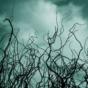 theresa thompson - spooky branches ipad wallpaper
