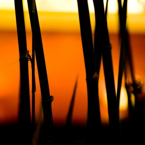 thomas hawk - bamboo silhouette ipad wallpaper