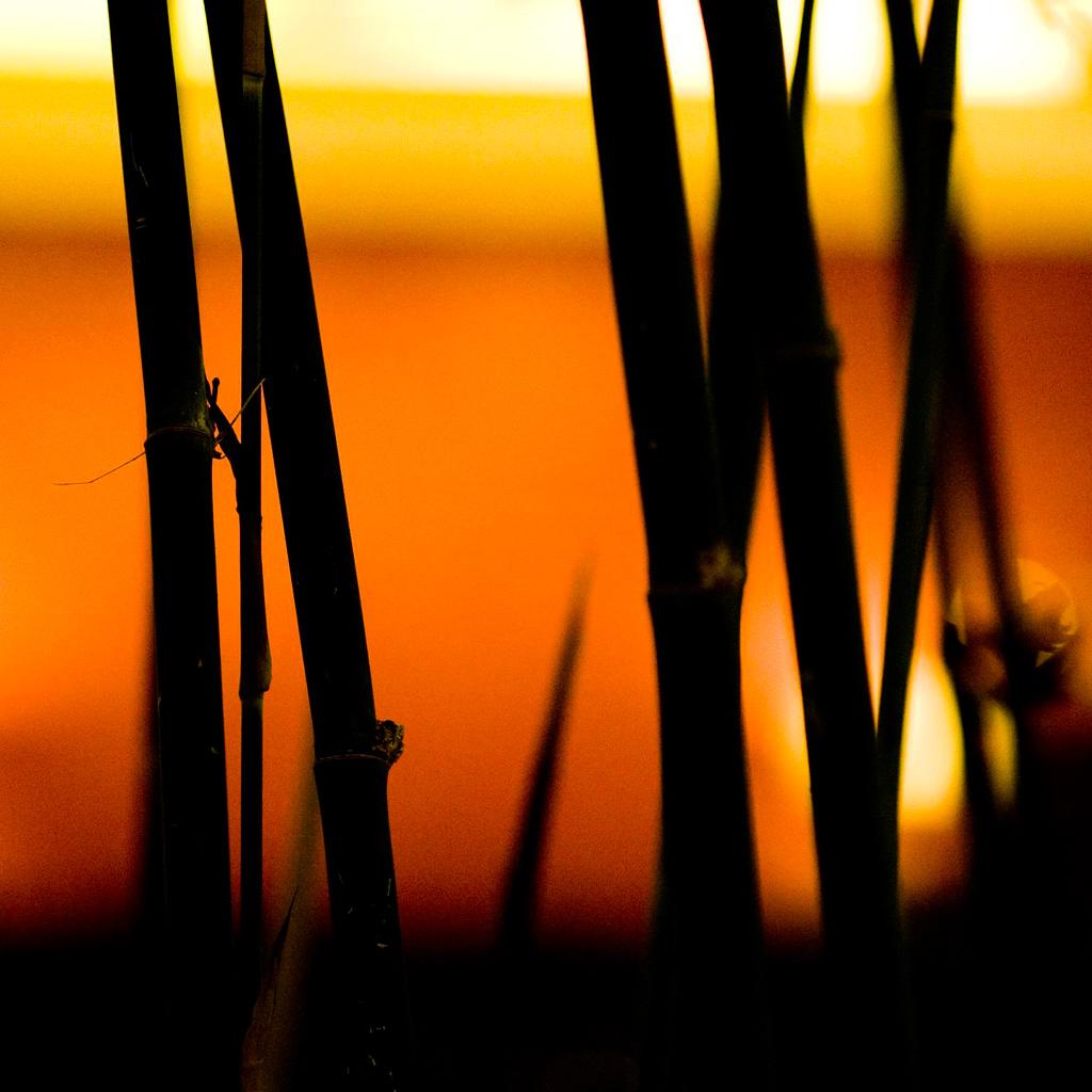 thomas hawk - bamboo silhouette ipad wallpaper
