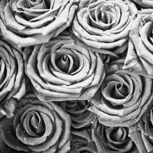 thomas hawk - black and white roses ipad wallpaper