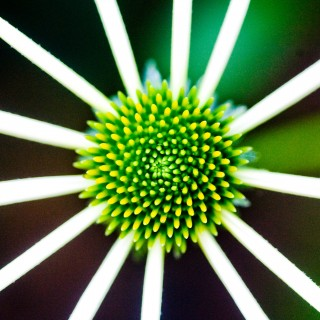 thomas hawk - green flower ipad wallpaper