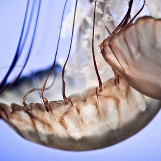 thomas hawk - jellyfishes ipad wallpaper
