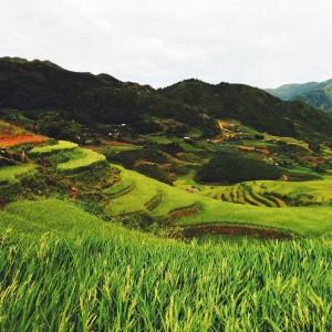 wendy tran - sapa valley rice terrace vietnam ipad wallpaper