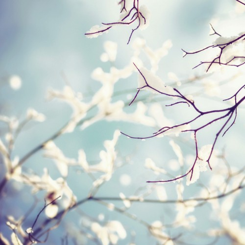 Snow on branches by Yves Ipad wallpaper