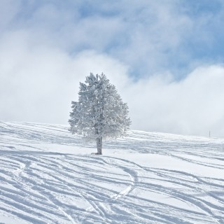 zach dischner - snow tree ipad wallpaper
