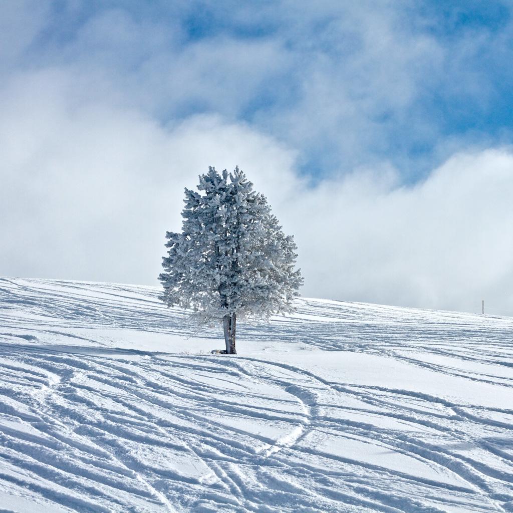 Snowy significado